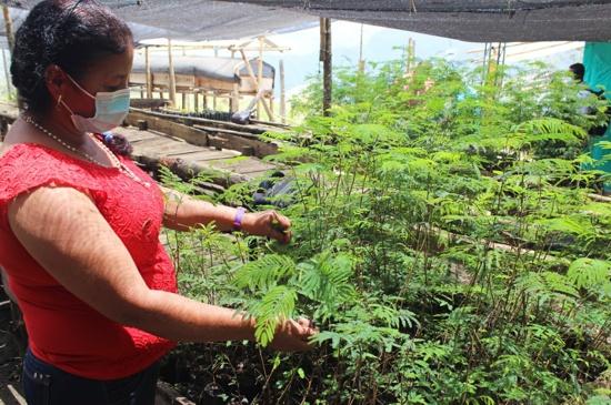 Economía verde - polo de desarrollo en el Cauca