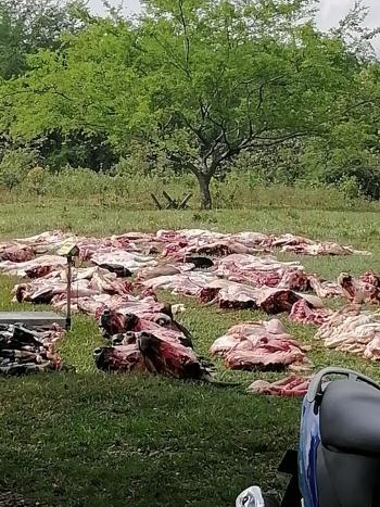 Incautan carne ilegal que sería comercializada en Quilichao