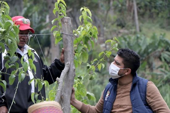 Sacha Inchi se proyecta como cultivo promisorio desde Toribío