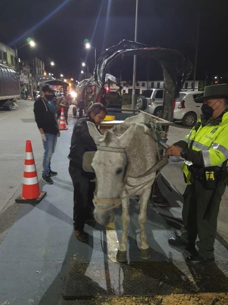 Se intensifican operativos de control a vehículos de tracción animal