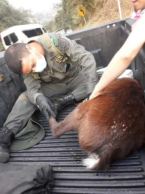 """""""Rechazamos los actos de violencia contra la fauna silvestre"""" director CRC"""