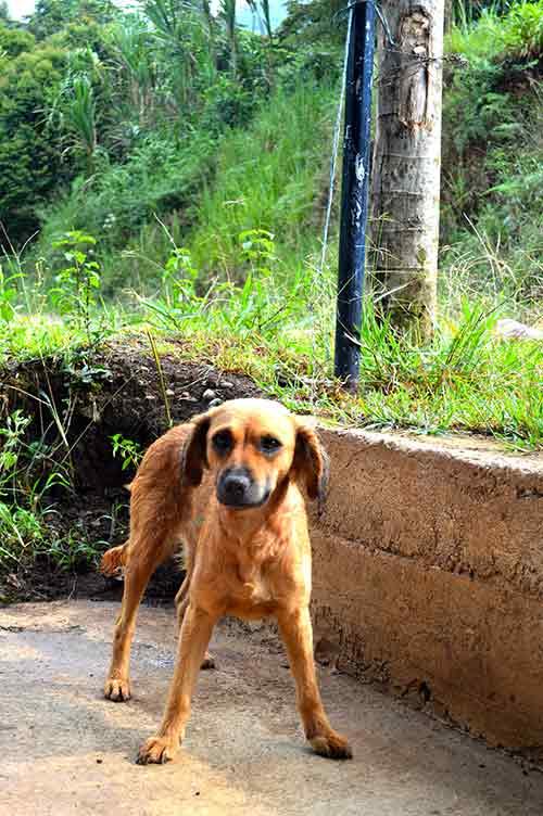 Esterilización de perros y gatos en la vereda San Isidro