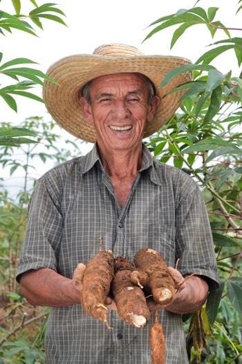 Agrosavia entregará semillas de yuca en el Cauca - Cultivador caucano