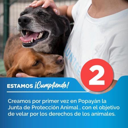 Se creó la Junta de Protección Animal en Popayán