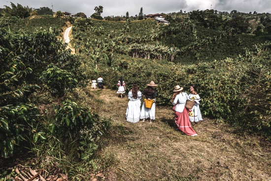 La economía agrícola familiar es la semilla para el progreso rural - ASCAFÉ - Cauca