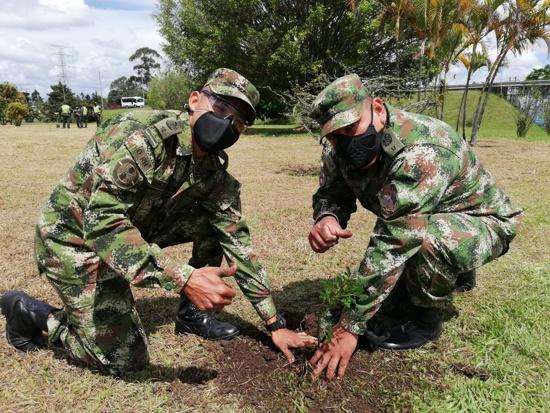 Un millón de árboles sembrados para el 2023 proyecta la CRC