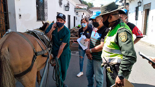 Rescate de equino