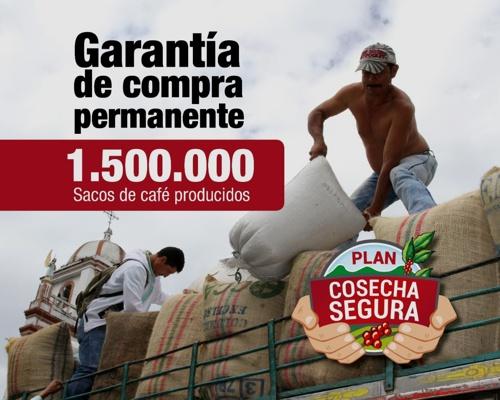 1.500.000 de sacos de café producidos en el 2020 - Comité de Cafeteros del Cauca