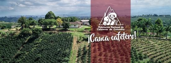 Comité de Cafeteros del Cauca hizo balance de su gestión 2020