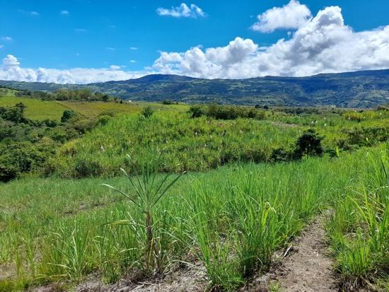 Corporación Nasa Kiwe: 26 años reconstruyendo la cuenca del río Páez
