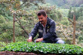 El Comité de Cafeteros del Cauca, iniciará un nuevo programa para incentivar la producción de café de alta calidad