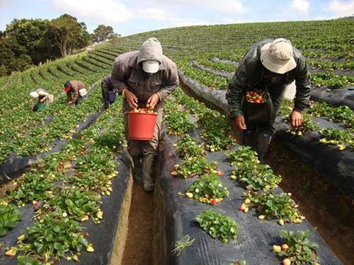 Cinco proyectos de Unicauca son financiados por el Sistema General de Regalías