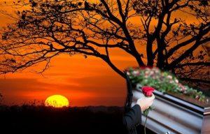Creencias y ceremonias alrededor de la muerte en el Patía