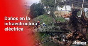 Caída de árbol causa ausencia del servicio de energía eléctrica en Popayán