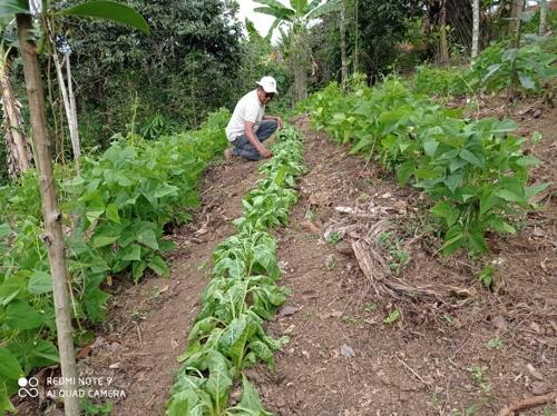 Huertas caseras fortalecen seguridad alimentaria en Quilichao