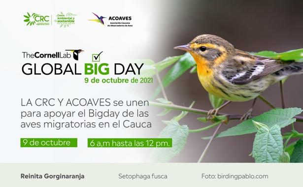 Cauca participará del Día Mundial de Observación de Aves