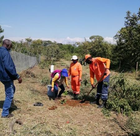 Más de 12 mil árboles fueron plantados en Cauca: CRC
